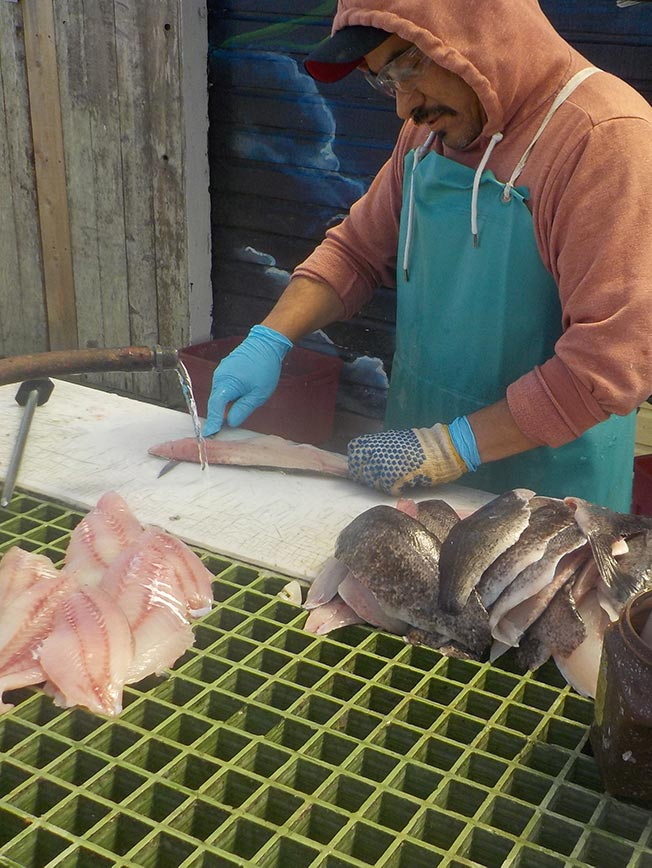 About - Cleaning Fish for You - Betty Kay Charters - Deep Sea Fishing Charters on the Southern Oregon Coast