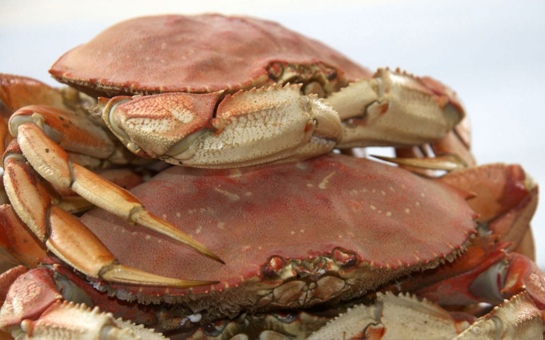 Crabs - Deep Sea Fishing Charters in Charleston Oregon
